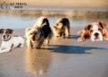 8 Best Dog Friendly Beaches in Tampa