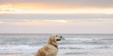 8 Dog Friendly Beaches in the USA